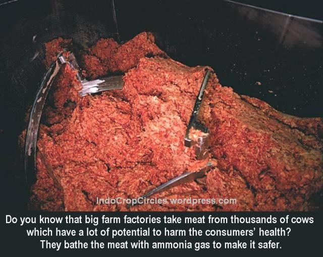 Ammonia to save the meat