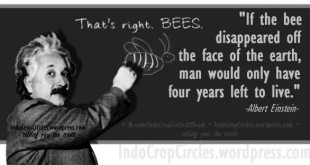 """If the bee disappeared off the face of the Earth, man would only have 4 years left to live."" (Albert Einstein)"