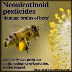 "neo-nicotinoids pada pestisida yang digunakan para petani dapat menimbulkan risiko tinggi bagi koloni lebah. ""Hilangnya semua lebah madu dewasa dalam sarang lebah, sementara larva lebah masih belum matang, dan madu pun tidak ada."""