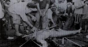 Gambar kekejaman Komunis
