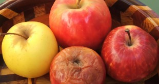 Apel busuk dlm keranjang