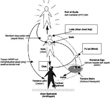 Struktur Manusia